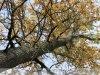 Doboz - Szanazugi erdő a Holt Fekete–Körössel