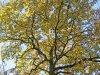 Dobozi erdő - napsütötte ősz 2020 novemberében I.