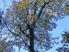 Dobozi erdő – napsütötte ősz 2020 novemberében II.