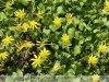 Gyula - tavaszi virágcsokor