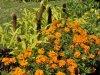 Gyulai virágok, EU versenyre készülve