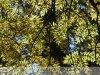 Szabadkígyós - A Wenckheim kastély parkja - őszi színekben.