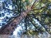 Szarvas - őszi arborétum