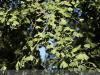 bodoky_arboretum_05