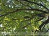 bodoky_arboretum_09
