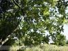 bodoky_arboretum_10