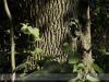 bodoky_arboretum_15
