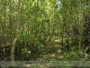 bodoky_arboretum_18