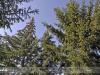 bodoky_arboretum_30
